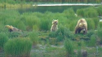 Holly 435 and cubs on Lower River cam. Katmai Brown Bears. 21