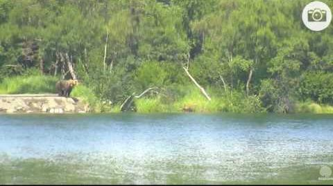 261 on the closed trail and snorkeling on the lower river on 07 07 2016, video by Mickey Williams