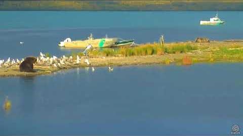 410 Moves 09 14 2017 approximately 18 30 video by flyer 7474 (aka SteveCA)