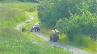 482 Brett & coys walking down the road ~ 2015 07 15, video by Victoria White