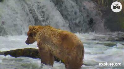 14-0723-Backpack Brooks Falls - Katmai National Park, Alaska - Bears - explore