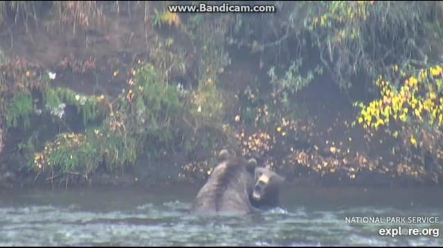 503 & 151 Walker Playing on Far Side of River 2018-09-21 by Birgitt