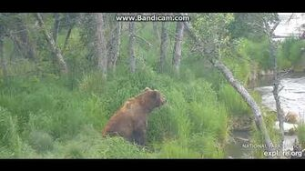 6 23 2019 Unidentified Medium Brown Adult Male (Could this be the real 603?) by Ratna