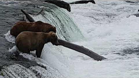 Katmi National Park 3 July 2018 by Mike Weagley-1