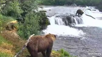 402 and two yearlings at the falls, video by Lani H