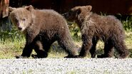 171 PIC 2019.07.03 10.40 2 SPRING CUBS STROLLING THROUGH CAMP TRUMAN EVERTS POSTED 2019.09.20 07.17