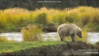482s Blond Cub on Closed Road 2019-09-27 16-27-29-738, video by Birgitt