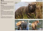 CC 408 INFO 2015 BoBr PAGE 84