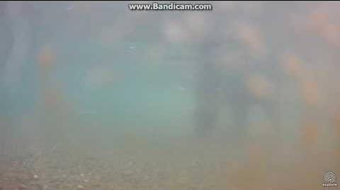 Bear 289 under water cam Brooks Falls Katmai 2017 07 15 video by Erum Chad (aka Erie)