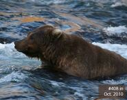 CC 408 PIC 2010.10.xx NPS PHOTO 2014 BoBr PG 50 BEARS NO LONGER SEEN PAGE