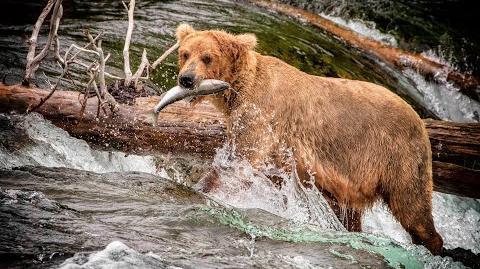 Katmai Alaska 2018 by samkindle
