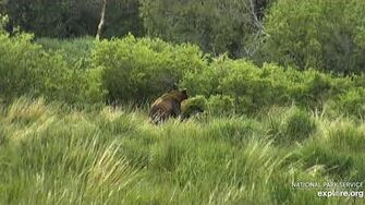 151 Walker mating with??? 6 23 2020, video by Lani H