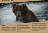 856 PIC xxxx.xx.xx 2018 BoBr PG 64 ADULT MALES GLANCES AT BEAR VIEWERS AS FISHES JACUZZI PAGE 64