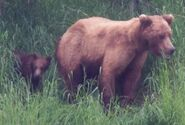 RANGER RUSS COMMENT 2018.07.05 13.06 re 12.08 PHOTOS OF 132 w REMAINING SPRING CUB 01 & 02 PIC ONLY ZOOM