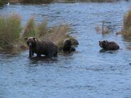 BRETT 482 PIC 2007.10.06 w 3 SPRING CUBS NPS PHOTO MIKE POSTED 2018.03.22