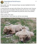 INFO BEARS SEEN 2018.05.20 or PRIOR 128 GRAZER w 3 THEN 2 2.5 YO CUBS KNP&P FB POST 2018.05.21 06.31