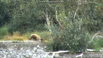 171 Sleeping on the Point Cubs Not Visible 2019-07-20 12-41-33-570, video by Birgitt
