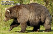 BEADNOSE 409 PIC 2015.09.23 NPS PHOTO 2015 FAT BEAR WEEK CONTEST
