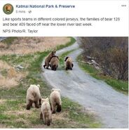 INFO BEARS SEEN 2018.05.24 - 2018.05.30 128 w 2 & 409 w 2 SPIT RD KNP&P 2018.06.01 06.01 FB POST