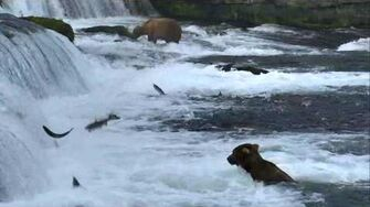 Bear Cam - Brooks Falls Cam 07-11-2017 22 00 07 - 22 59 57