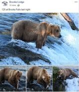 INFO BEARS SEEN 2019.06.19 128 GRAZER KARA STENBER BL 2019.06.20 15.57 FB POST