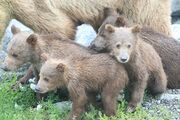 EXPLORE BLOG 2018.07.18 FOUR CUBS FOR 402 AGAIN PIC 03 ONLY