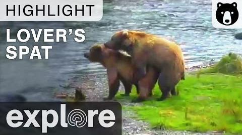 A Lover's Spat - Katmai National Park - Live Cam Highlight July 13, 2015-0