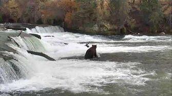 Brooks Falls Brown Bears Cam 10-27-2017 16 00 11 - 16 59 58 Explore Recorder
