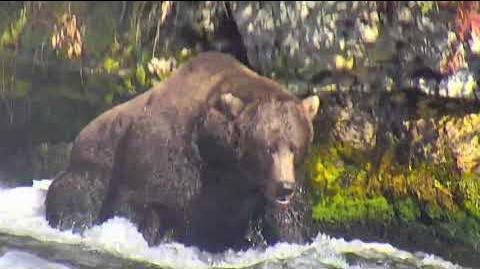 Bear 856 2018 Season by Deanna Dittloff (aka deelynnd)