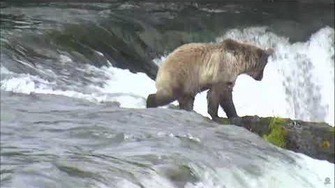 08.13.2017 - 284 and Cubs - 3 Bear Butts on a Rock video by Brenda D