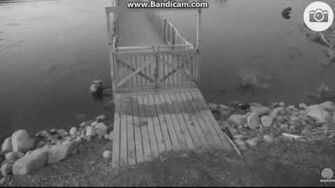 94 and cub beautiful bw video by Ratna