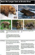 JACK 418 INFO 2014 BoBr PAGE 50 BEARS NO LONGER SEEN AT BROOKS RIVER