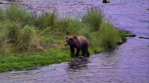 08.21.2017 - 284 And Cubs At The Falls