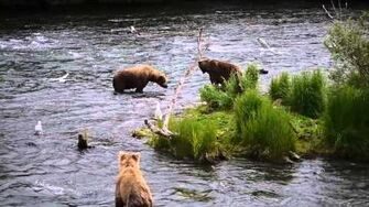 Bears fight over fish, nobody wins 2011 or Prior 634 Popeye & 218 Ugly by guitarhead615-0