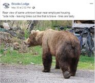 INFO BEARS SEEN 2019.05.xx WHO BL 2019.05.30 10.02 FB POST w KARA STENBERG PIC REAR VIEW