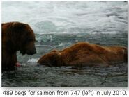 TED 489 PIC 2010.07.xx BEGS SALMON FROM 747 LEFT NPS PHOTO 2015 BoBr PG 62 01