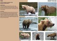 153 INFO 2016 BEARS OF BROOKS BOOK PAGE 37