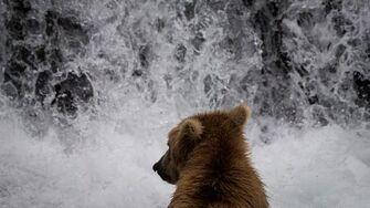 Bears of Brooks Falls by Kristi Odom