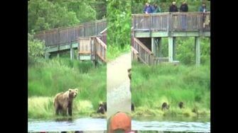 Brown Bears - Alaska - 2010 (not 2011) by GrizBear44