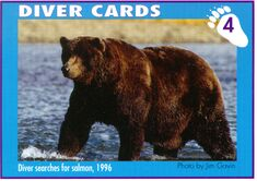 DIVER 1 PIC 1996.xx.xx KNP&P FLICKR ALBUM TRADING CARD 4 w PHOTO BY JIM GAVIN