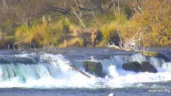 907 enters the falls from above, riffles view 10 13 2019, video by Lani H
