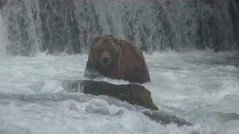 Katmai National Park - The Bears by Hoosier Tim's Travel Videos