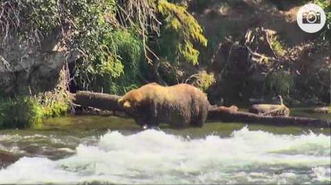 410 enjoying some salmon 12 25 07 13 2016 video by Mickey Williams