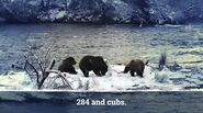 ELECTRA 284 PIC 2017.10.xx w 2 CUBS GREENRIVER POSTED 2020.02.09 08.04 01
