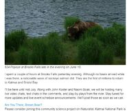 MIKE FITZ COMMENT 2019.06.17 08.15 AFTER EDIT ARE YOU THERE BROWN BEAR iNATURALIST PROJECT 03
