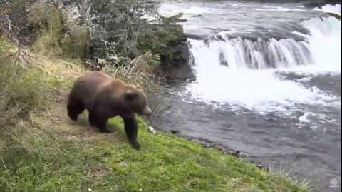 09.30.2016 - Bear 289 video by Brenda D