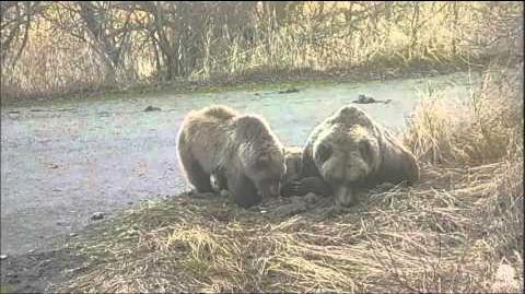 10 40 am 451 & cub return 10.23.15 video by Mickey Williams