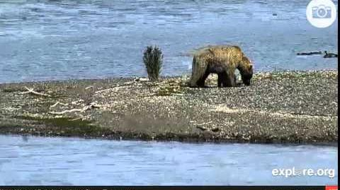 171 and 2 spring cubs 07 15 2014 video by Various Videos 1