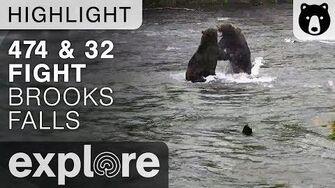 474 And 32 Fight - Katmai National Park - Live Cam Highlight 9 18 2017
