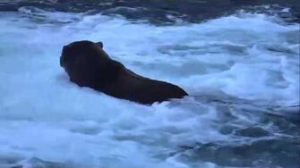 Brooks Falls - Katmai National Park, Alaska Cam 10-15-2015 20 00 50 - 20 05 47 Explore Recorder